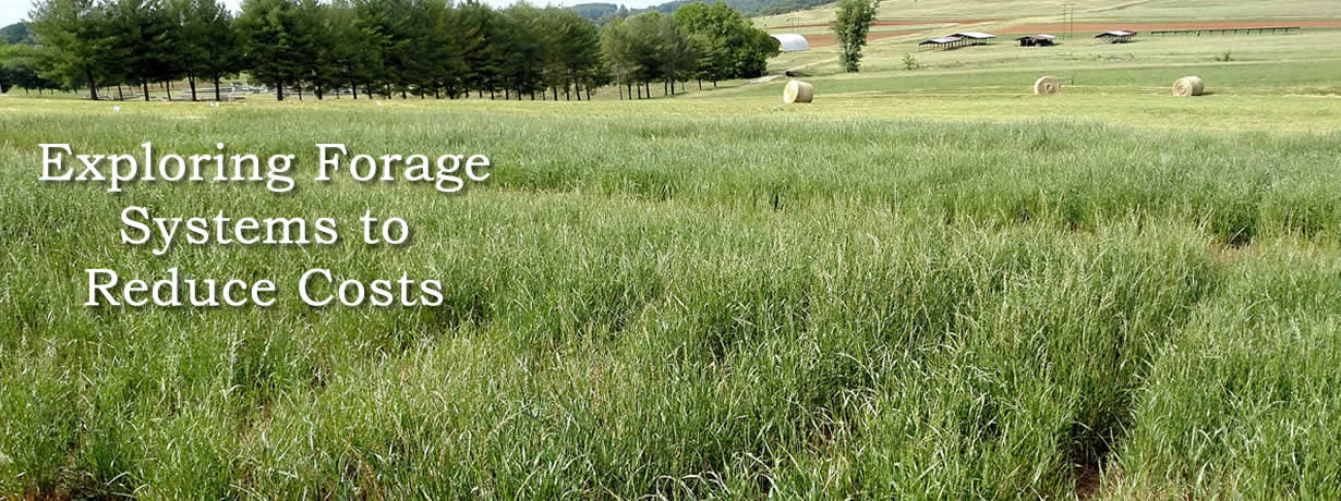 Exploring Forage Systems to Reduce Costs