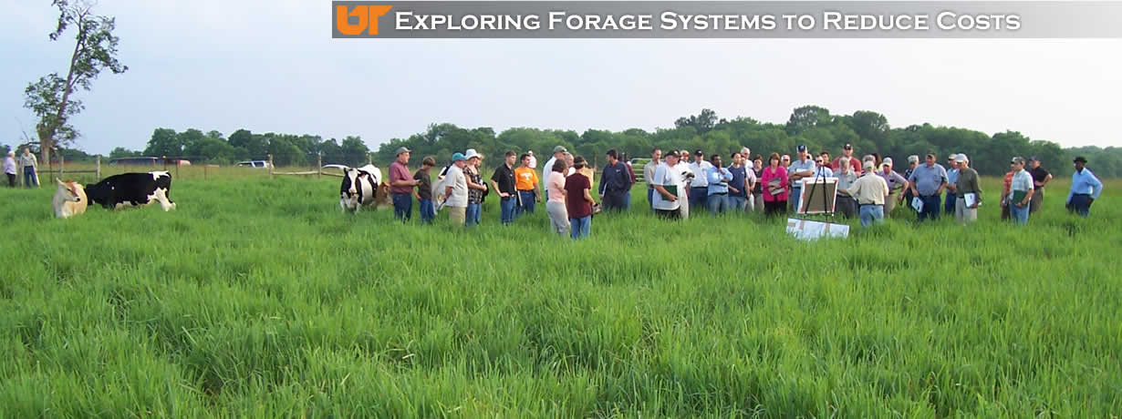 Exploring Forage Systems to Reduce Cost