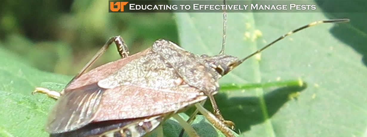 Educating to Effectively Manage Pests