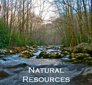 Link to Natural Resources Leadership Team