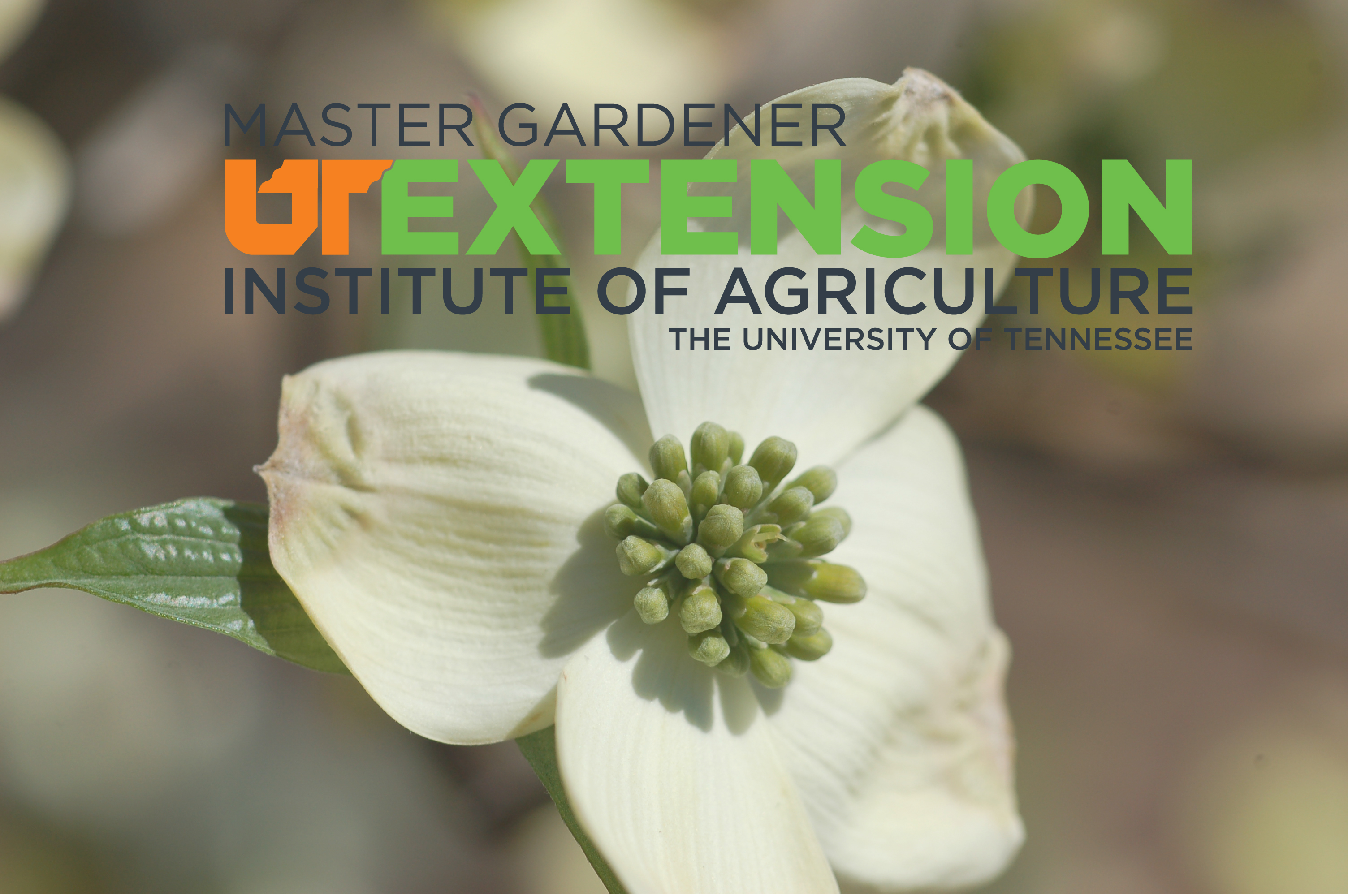 Tennessee Extension Master Gardener Program