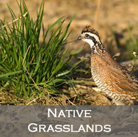 Native Grasslands image link