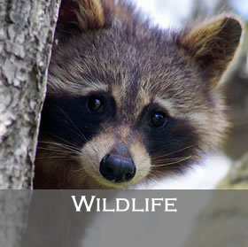 Wildlife Program link