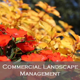 Commercial Landscape Management Programs