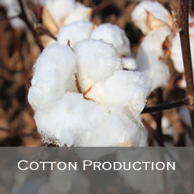 Cotton Production Programs