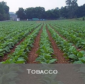 Tobacco Programs