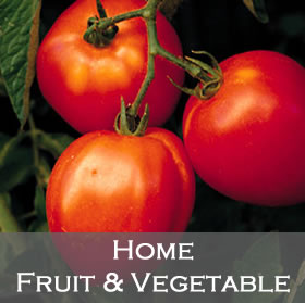 Home Fruit and Vegetable