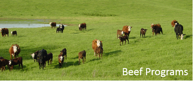 Beef Cattle Programs