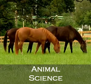 Animal Science tile image